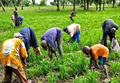 Agric.png