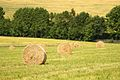Agriculture CZ (2).jpg