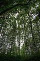 Alder grove forest ozette d archuleta 2015 (22707704409).jpg