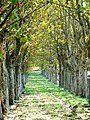 Allée de platanes du château de Pradel, Mirabel, Ardèche, France.jpg