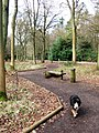 All Ability Trail, Wendover Woods - geograph.org.uk - 1192413.jpg