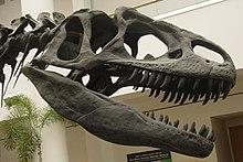 أحياء تطوري الثيروبودوات Theropods