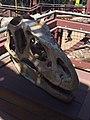 Allosaurus skull cast Discovery Science Center.jpg