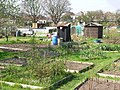 Allotments in Oakdale - geograph.org.uk - 394908.jpg