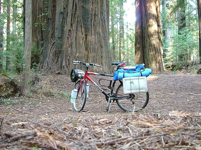 File:Along Avenue Of The Giants, redwood forest. (10303096636).jpg