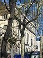 Alzina del passeig de Gràcia P1420903.JPG