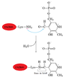 Aminotransferasa+coenzimaPLP.png