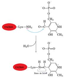 aspartato aminotransferasa valores normales pdf