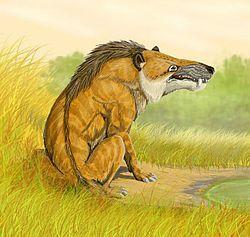 Andrewsarchus, imaginé par un artiste