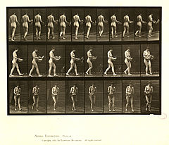 Animal locomotion. Plate 43 (Boston Public Library).jpg