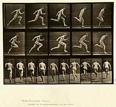 Animal locomotion. Plate 63 (Boston Public Library).jpg
