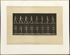 Animal locomotion. Plate 8 (Boston Public Library).jpg