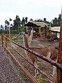 Animals of Peru 137.jpg
