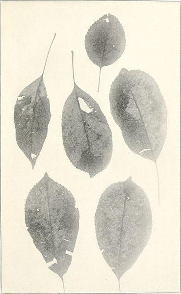 Herbert Welsh collection