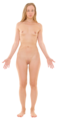 Anterior view of human female, retouched - transparent.png
