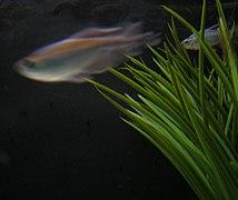 Aquarium vue.JPG