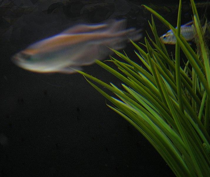 File:Aquarium vue.JPG