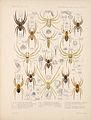 Arachnida Araneidea Vol 1 Table 32.jpg