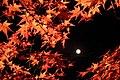 Arashiyama Hanatōro, Nison-in 嵐山花灯路・二尊院 紅葉と月DSCF5363.JPG