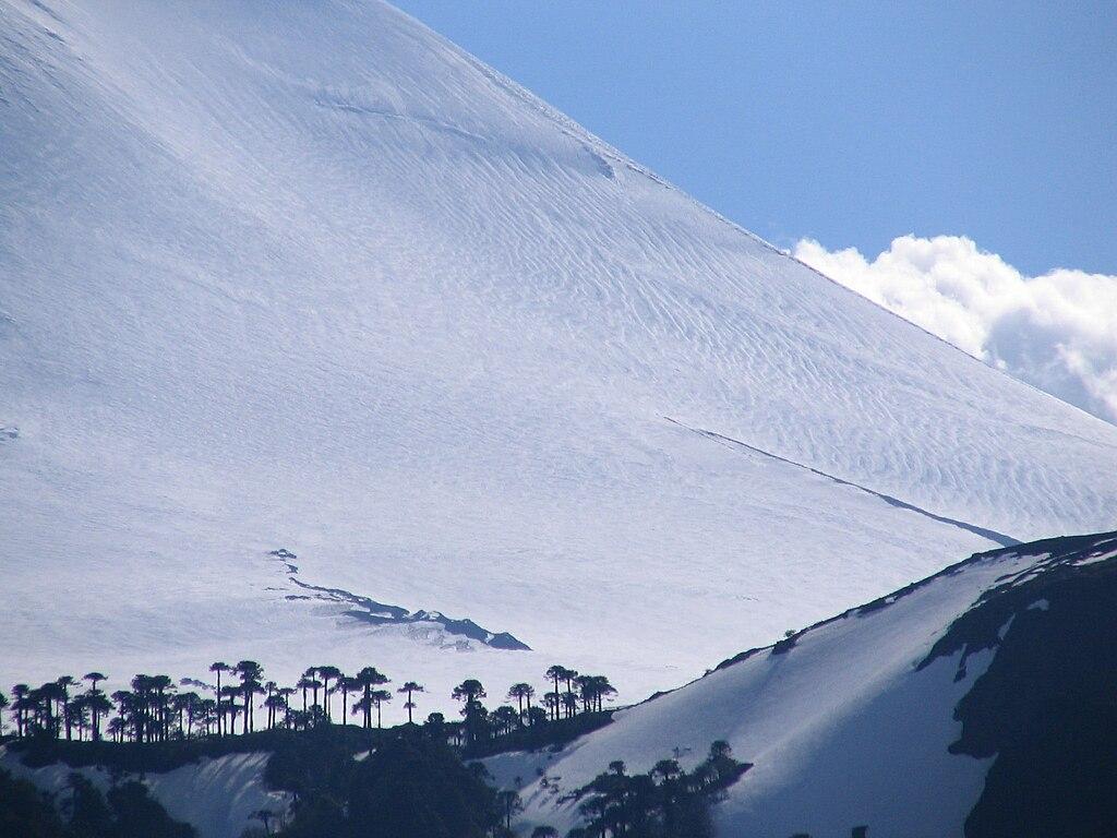http://upload.wikimedia.org/wikipedia/commons/thumb/9/98/Araucaria_araucana%2C_Volcan_Llaima.jpg/1024px-Araucaria_araucana%2C_Volcan_Llaima.jpg