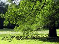 Arboretum, Kórnik 2010 (22).jpg