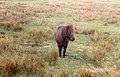 Around the Lake District, Cumbria (200638) (9451519033).jpg