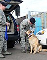 As MWD retires, former handlers share 'tails' of Man's Best Friend 120224-F-EJ686-035.jpg