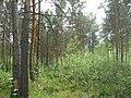 Asino, Tomskaya oblast', Russia - panoramio (12).jpg