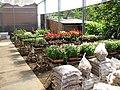Associação de Floricultores da Rota Romântica 004.JPG