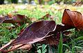 Autum leaves.jpg