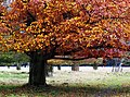 Autumn, Bushy Park. - panoramio (2).jpg
