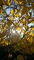 Autumn (124021633).jpeg