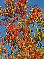 Autumn Colour (22963873955).jpg