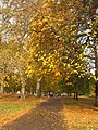 Autumn colours in St James's Park - geograph.org.uk - 1568780.jpg