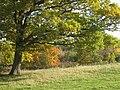 Autumnal Tree at Barnett's Wood Nature Reserve - geograph.org.uk - 2136486.jpg