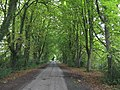Avenue Of Trees Near Leysters - geograph.org.uk - 1460875.jpg