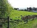 Ballynasollus Townland - geograph.org.uk - 1313699.jpg