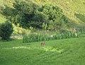 Bambi - panoramio (1).jpg