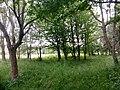 Baraggia di Bellinzago - bosco.jpg