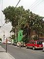 Barrio San Andrès. - panoramio.jpg