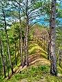 Bauko Peaks in Benguet - 3.jpg