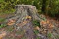Baumpilz im Landschaftsschutzgebiet Gehrdener Berg IMG 5210.jpg