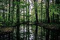 Baumspiegelung.jpg