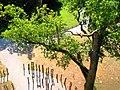 Baumwipfelpfad Ivenacker Eichen.jpg