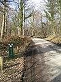 Bedgebury Forest - geograph.org.uk - 347849.jpg