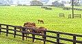 Belle Reve Farm KY.jpg