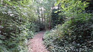 Belsize Wood - Path in the southern end of Belsize Wood