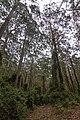 Benandarah NSW 2536, Australia - panoramio (52).jpg