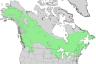 Betula papyrifera range map 2.png