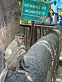Beware of Monkeys - Elephanta Island - Mumbai - Maharashtra - India (25804605444).jpg